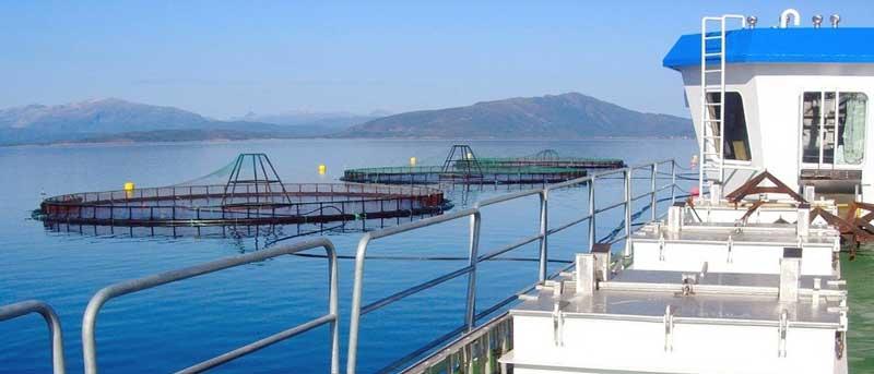 acuicultura Aquaculture03 | Acuicultura